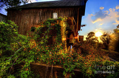 Tactor Overgrown With Flowers And Weeds At Sunset Print by Dan Friend