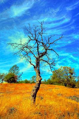 Tall Bare Tree With White Clouds And Blue Sky. Print by Gregory Dean