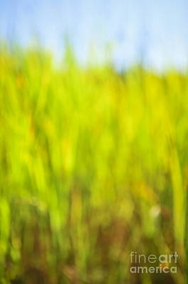 Abstract Photograph - Tall Grass by Elena Elisseeva