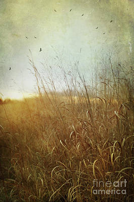 Tall Grass Growing In Late Autumn Print by Sandra Cunningham