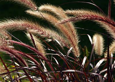 Jim Nelson Photograph - Tall Grass by Jim Nelson