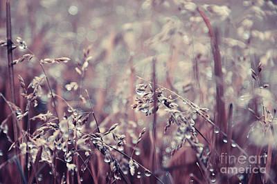 Rainy Day Photograph - Teardrops - Brownish by Aimelle