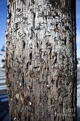 Telephone Poles Photograph - Telephone Pole Covered With Staples And Nails by Paul Edmondson