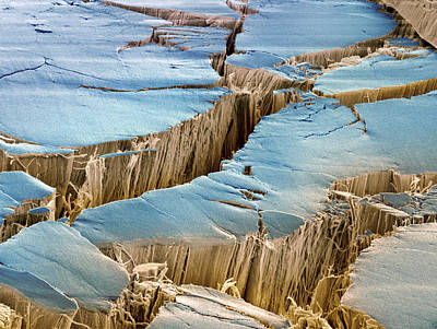 Tendon, Sem Print by Steve Gschmeissner