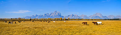 Nature Photograph - Tetons And Horses Panorama by Greg Norrell