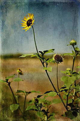 Textured Sunflower Print by Melany Sarafis