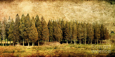 Textured Trees Print by Linde Townsend