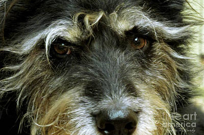 Irish Wolfhound Photograph - That's My Scruffy Dog by Kathie McCurdy