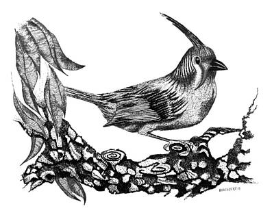 Pen Drawing - The Black Bird by Mario Perez