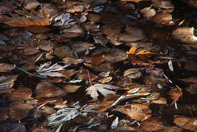The Browns Of Fall Print by Cynthia  Cox Cottam