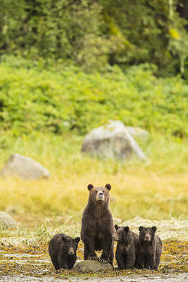Prints Of Alaska Photograph - The Curious Mom by Tim Grams