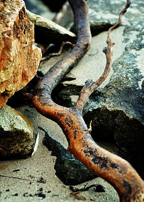 Curvilinear Photograph - The Curving Branch by Rebecca Sherman