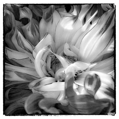 Dahlia Photograph - The Dahlia by David Patterson