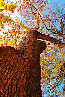 The Deer  Autumn Leaves Tree Print by Peggy  Franz