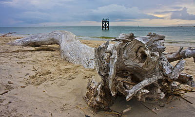 Driftwood Photograph - The Drifter by Betsy Knapp