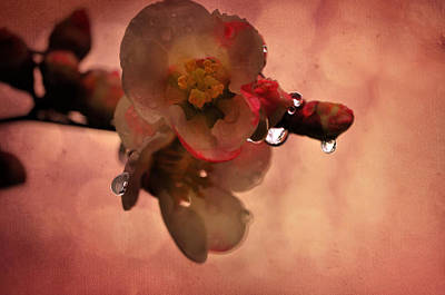 Flower Photograph - The Dropets by Emily Stauring