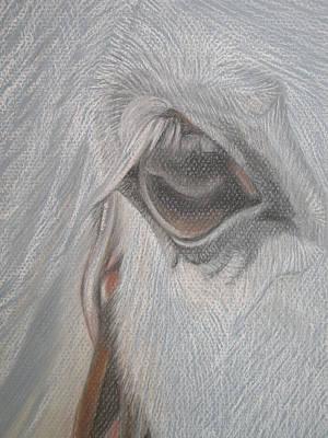The Eye  Print by Stephanie L Carr