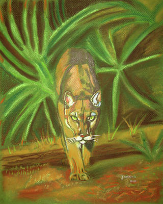 Panther Drawing - The Florida Panther  by John Keaton
