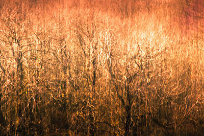 Nature Abstract Photograph - The Forest Fire by Justin Albrecht
