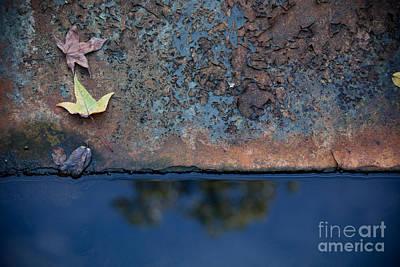 The Garden Pond Print by Steven Gray