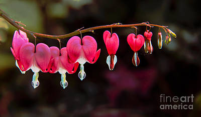 The Hearts Print by Robert Bales