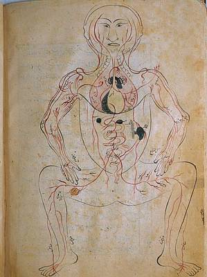 The Human Venous System, From Mansurs Print by Everett