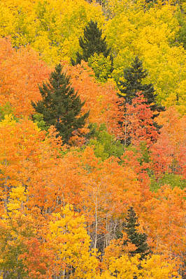 The Leaves Of A Forest Change Colors Print by Ralph Lee Hopkins