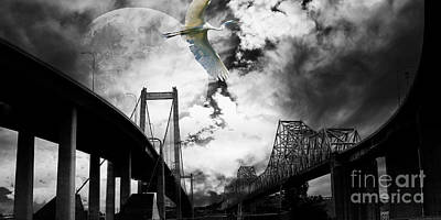 Egrets Photograph - The Long Journey by Wingsdomain Art and Photography