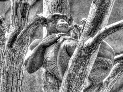 The Naked Ape Original by William Fields