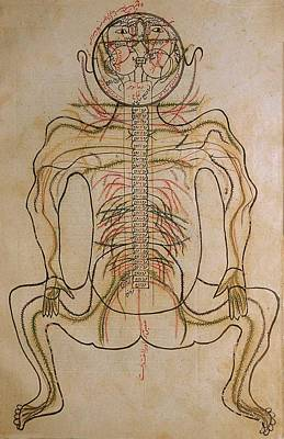 The Nervous System, From Mansurs Print by Everett