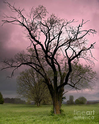 The Old Tree Print by Brian Stamm