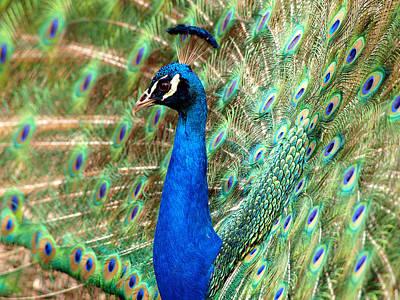 Blooming Digital Art - The Peacock by Paul Ge