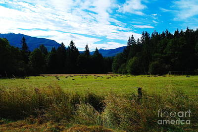 Feild Photograph - The Second Harvest  by Jeff Swan