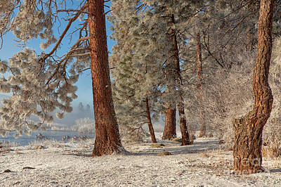 The Smell Of Pines II Print by Beve Brown-Clark Photography