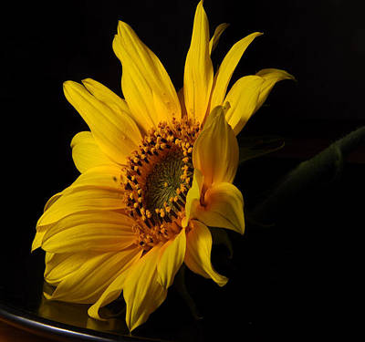 The Sun Flower  Print by Davor Sintic