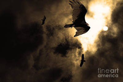 Vulture Photograph - The Vultures Have Gathered In My Dreams . Version 2 . Golden by Wingsdomain Art and Photography