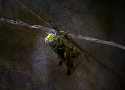 Grasshopper Digital Art - The World Below by Ron Jones