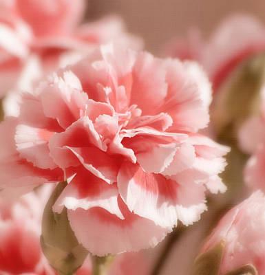 Pink Carnation Photograph - Think Pink by Kim Hojnacki