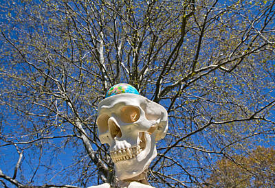 Skull Photograph - Thought Theater  by Betsy C Knapp