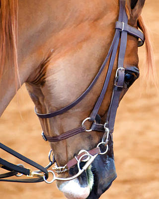 Scottsdale Arabian Horse Show Photograph - Thoughtful by Diane Wood