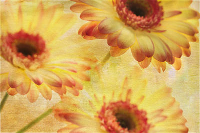 Gerber Daisy Photograph - Three Gs by Rebecca Cozart