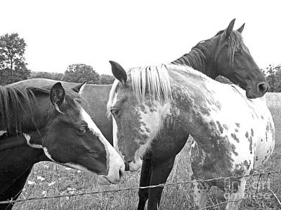Western Chic Photograph - Three Horses by Glennis Siverson