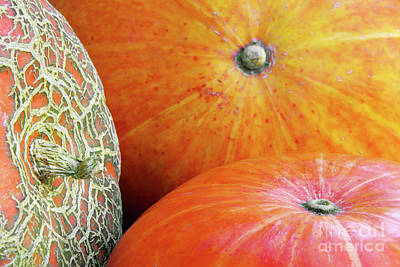 Biologic Photograph - Three Pumpkins by Carlos Caetano