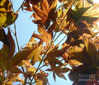 Indiana Photograph - Through The Japanese Maple by Alys Caviness-Gober