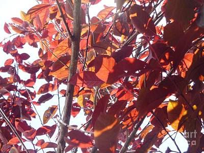 Indiana Photograph - Through The Plum Tree I by Alys Caviness-Gober