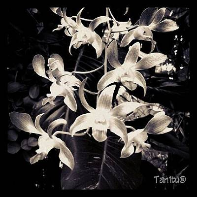 Orchids Photograph - #ti_challenge_34 @true_instinct by Tania Torres