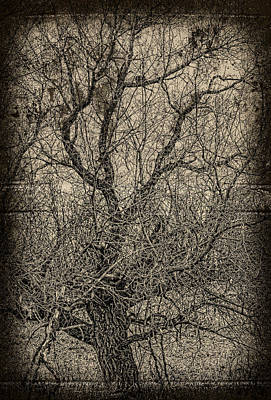 Tickle Of Branches  Print by JC Photography and Art
