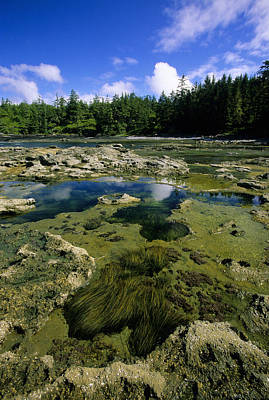 Tide Pools, Botanical Beach, Vancouver Print by John Sylvester
