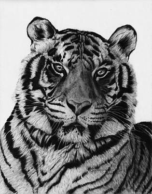 Drawing - Tiger by Jyvonne Inman