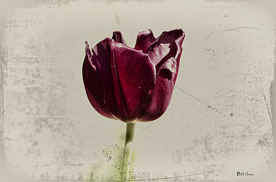 Todays Tulip Print by Bill Cannon